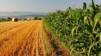 Photo of 60 MLN DI EURO EROGATI NEL 2020 ALLE IMPRESE AGRICOLE ABRUZZESI