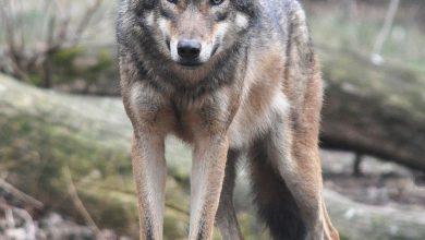 Photo of L'ENPA CHIEDE DI INASPRIRE LE SANZIONI PER CHI UCCIDE GLI ANIMALI PROTETTI