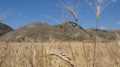 Photo of VALOR, IL PROGETTO DI FORMAZIONE ALL'AGROECOLOGIA