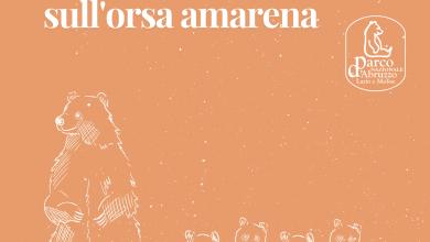 Photo of L'ORSA AMARENA: IL PUNTO DELLA SITUAZIONE