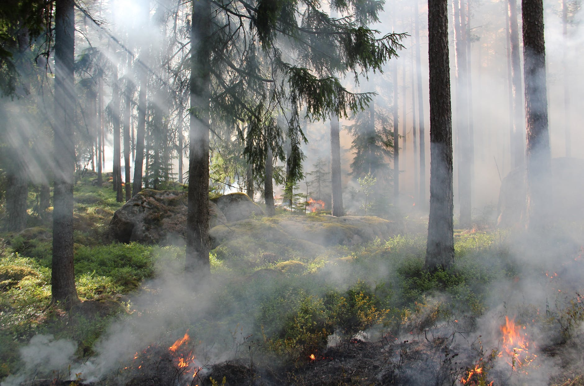 forest tree fire hot