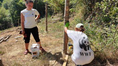 Photo of WWF ABRUZZO CERCA VOLONTARI PER TUTELARE L'ORSO MARSICANO